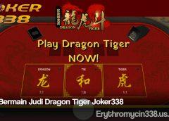 Cara Bermain Judi Dragon Tiger Joker338